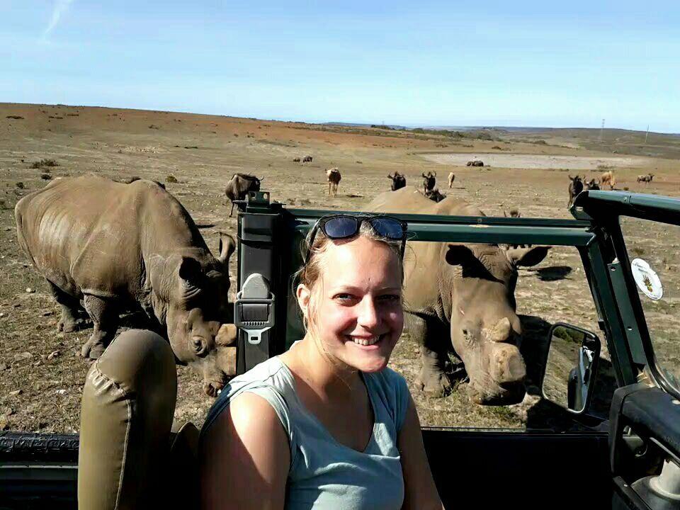 Game watching rhinos